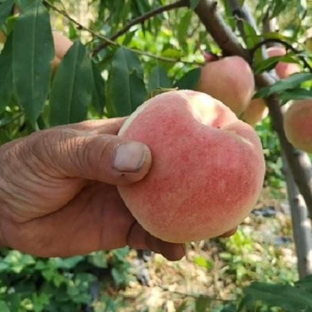 【老区优品】农家自产 清江 金秋红蜜 映霜红桃  5斤装 现摘现发  脆甜可口