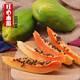 【限时促销10斤28.8元】新鲜广西木瓜红心现摘热带应季冰糖牛奶木瓜水果整箱批发包邮直发