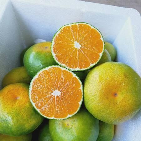 神龙栖 蜜桔当季新鲜时令水果5斤整箱特早熟酸甜薄皮桔子柑橘